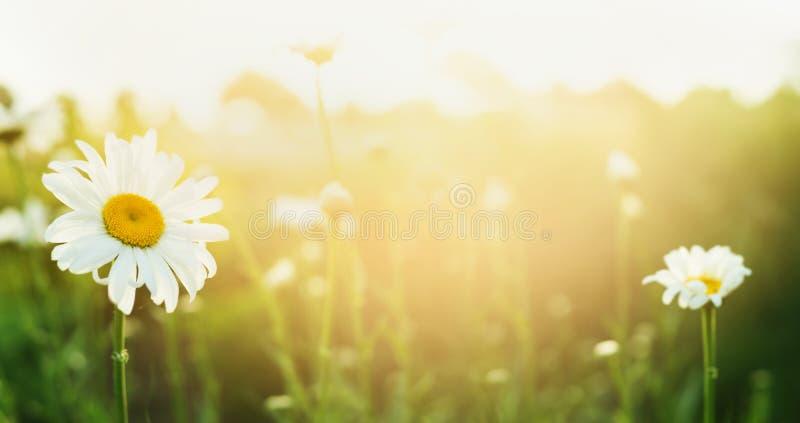 Sommernaturhintergrund mit Podien und Sonnenlicht, Fahne lizenzfreies stockfoto