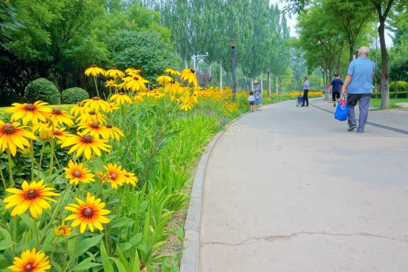 Sommerparklandschaft lizenzfreies stockfoto