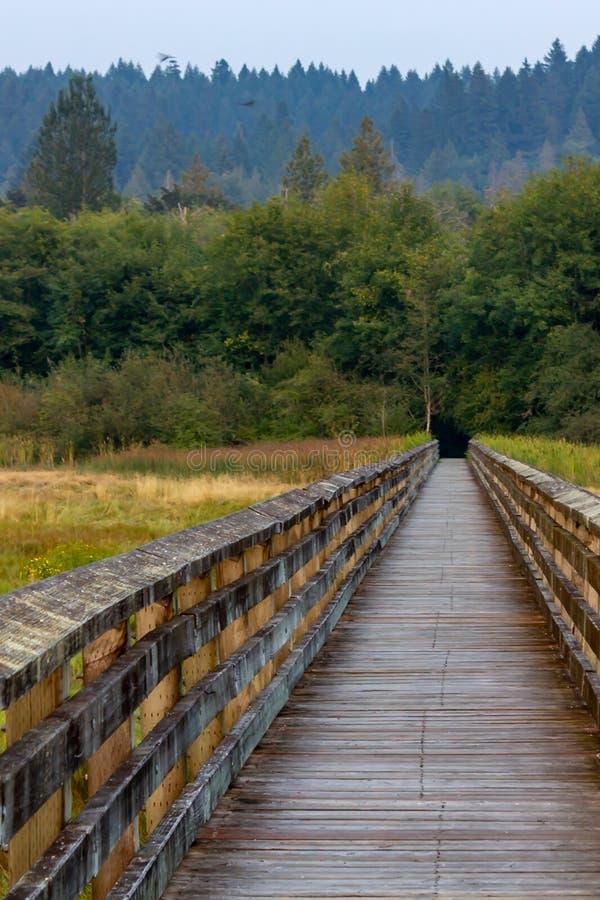 Sommerpromenade, die über Sumpfgebiete und Gräser ausdehnt stockfotos
