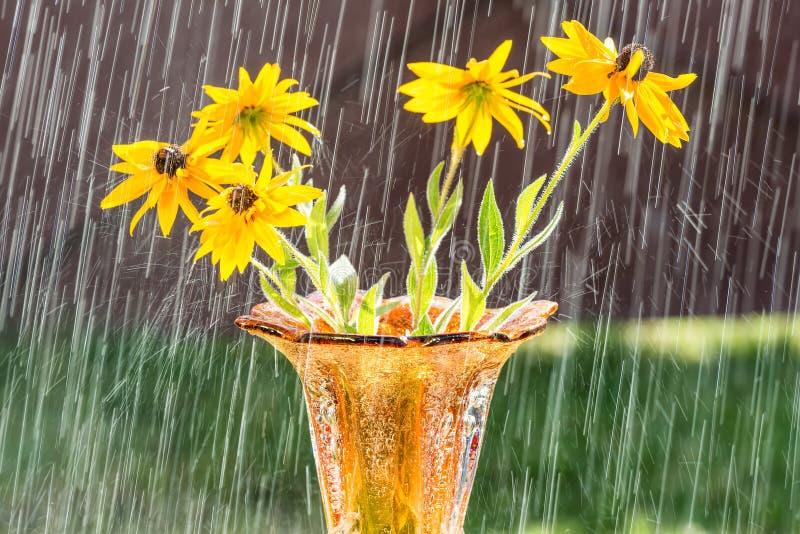 Sommerregen und wilde Blumen lizenzfreies stockfoto