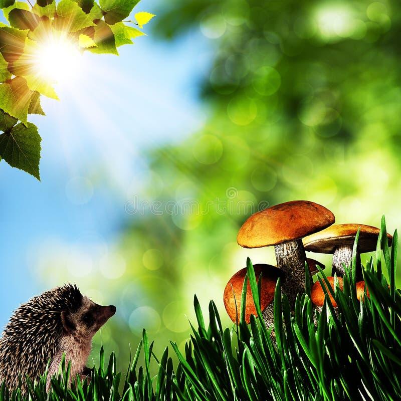 Sommerschönheitstag im Wald lizenzfreies stockbild