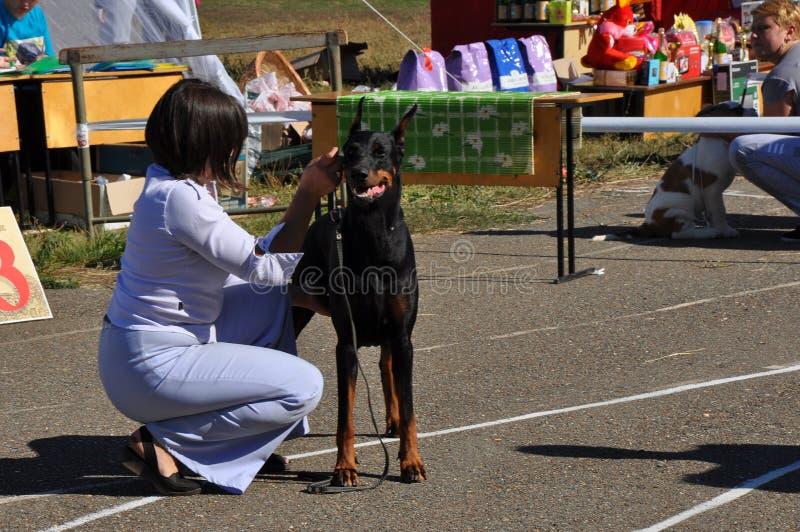 Sommershowhund Redaktionelles Bild