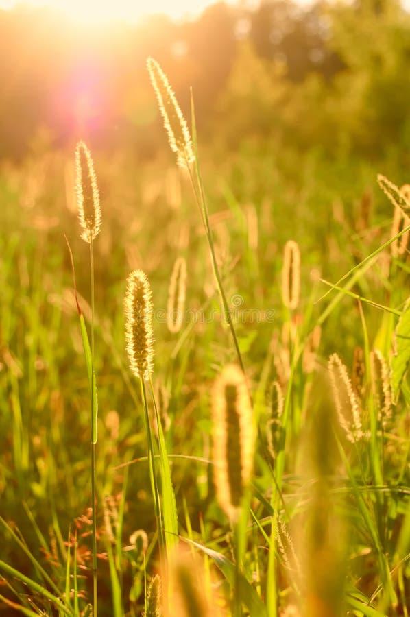 Sommersonne stockfotos