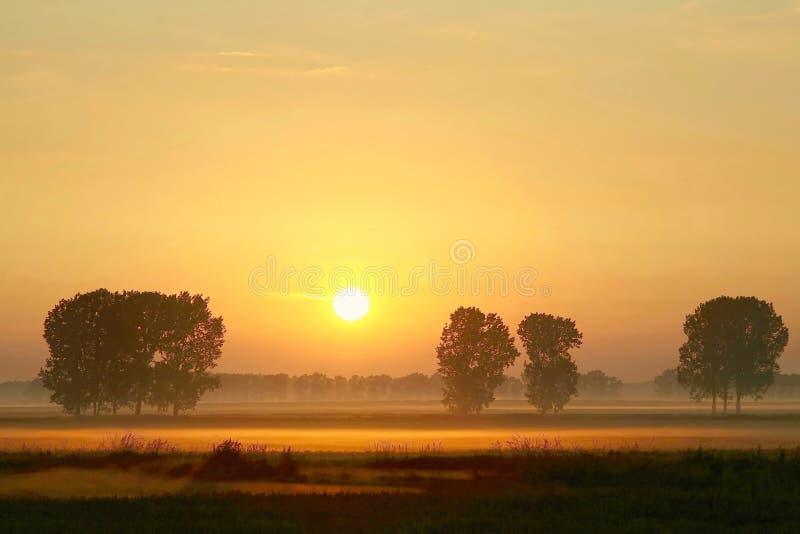 Sommersonnenaufgang mit Bäumen im Nebel stockfoto