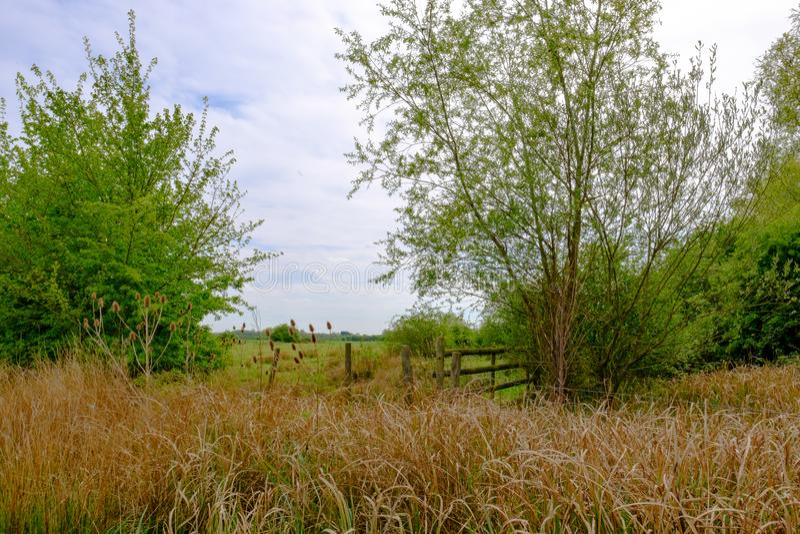 Sommerszene einer anbaufähigen Weizenernte gesehen in der englischen Landschaft stockfoto