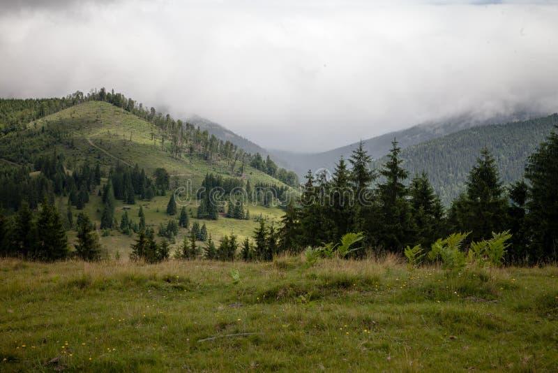 Sommertag in den Karpatenbergen stockbilder