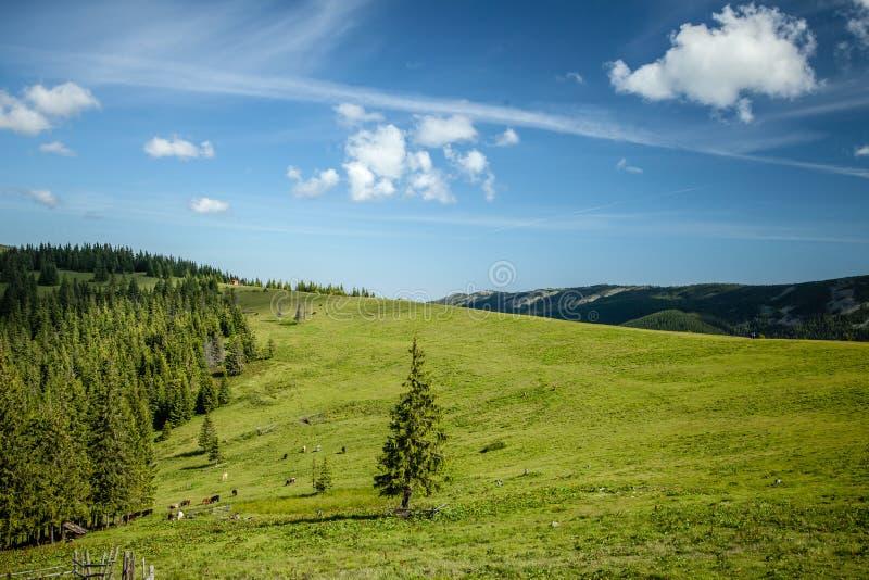 Sommertag in den Karpatenbergen stockbild