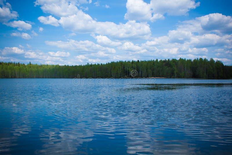 Sommertag an einem Waldsee stockfotografie