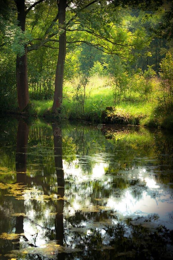Sommerteich im Wald lizenzfreie stockfotos