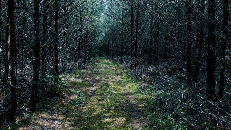 Sommerwald in den dunklen Farben stockfoto