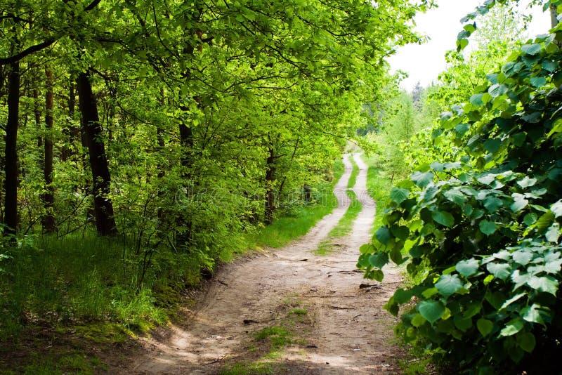 Sommerwald eine Landstraße stockbild