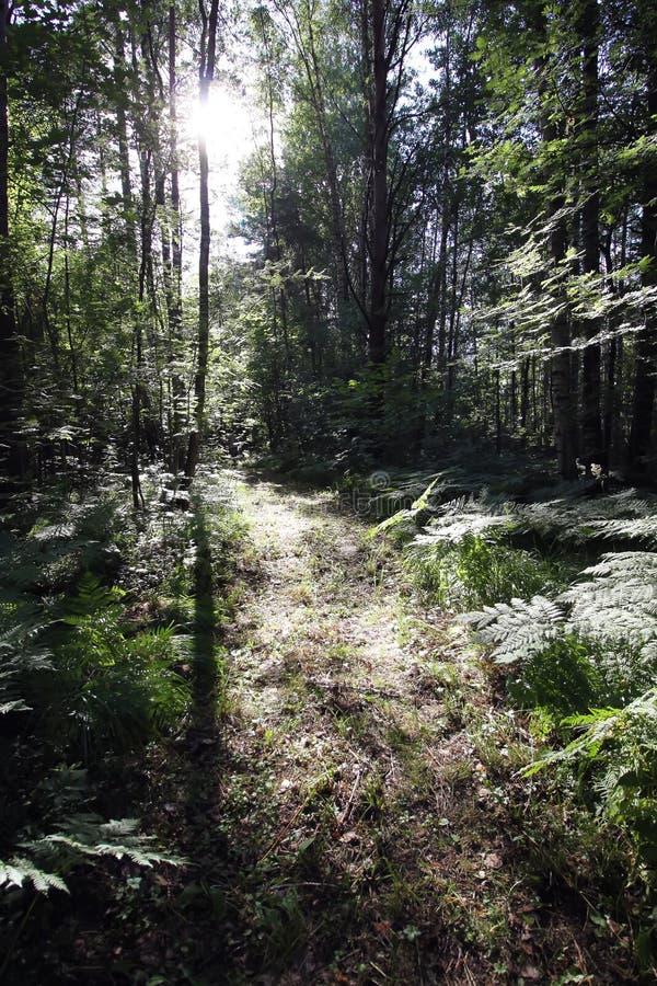 Sommerwald in Europa Natur in der Landschaft lizenzfreies stockbild