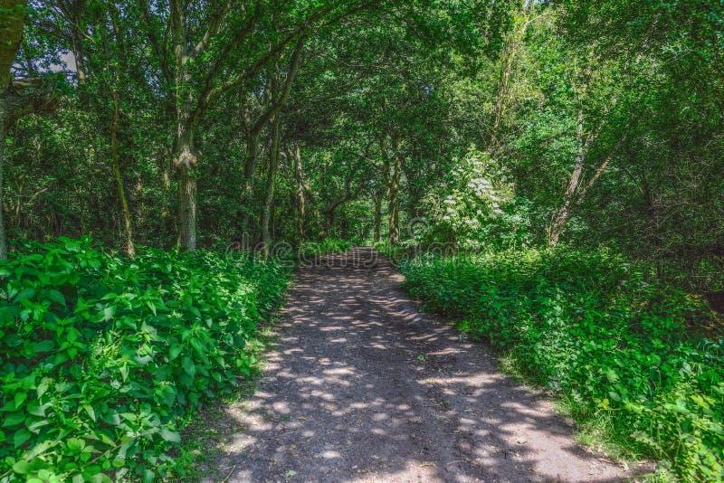 Sommerwaldweg mit geschecktem Sonnenschein lizenzfreies stockbild