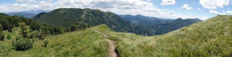 Sommerweide unten des Gipfels von Kobla in Julian Alps in Slowenien stockbilder
