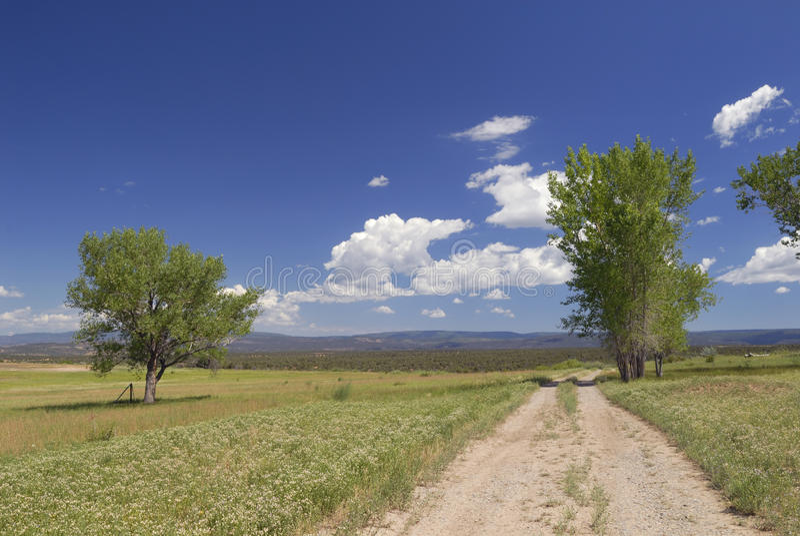Sommerwiese in Westkolorado stockbild