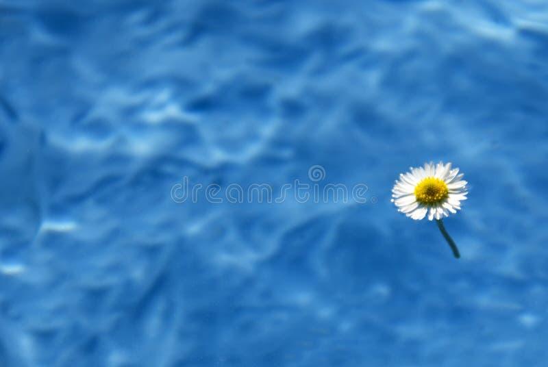 Sommerzeit stockfoto