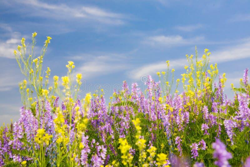 Download Sommerzeit stockfoto. Bild von park, blatt, land, flora - 9090666