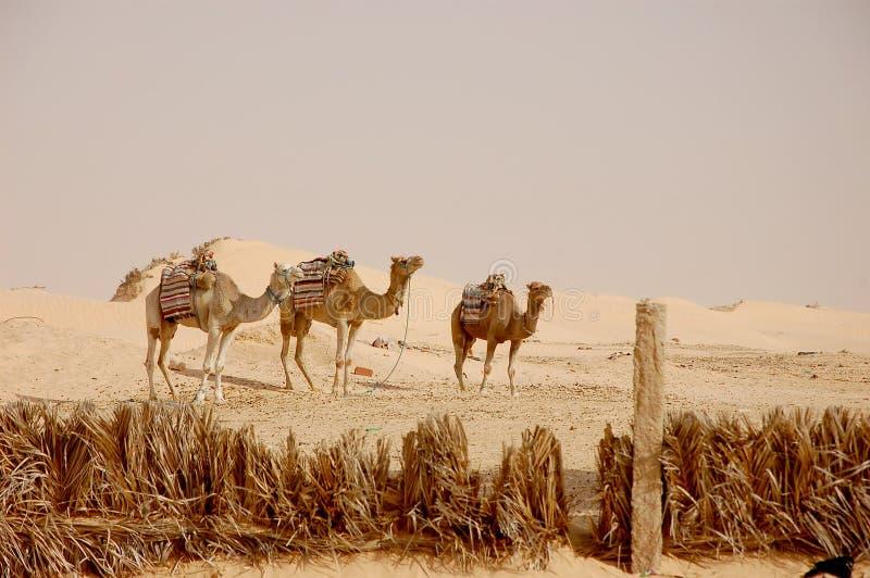 Sommerzeit-Sahara-Wüste in Tunesien lizenzfreie stockbilder