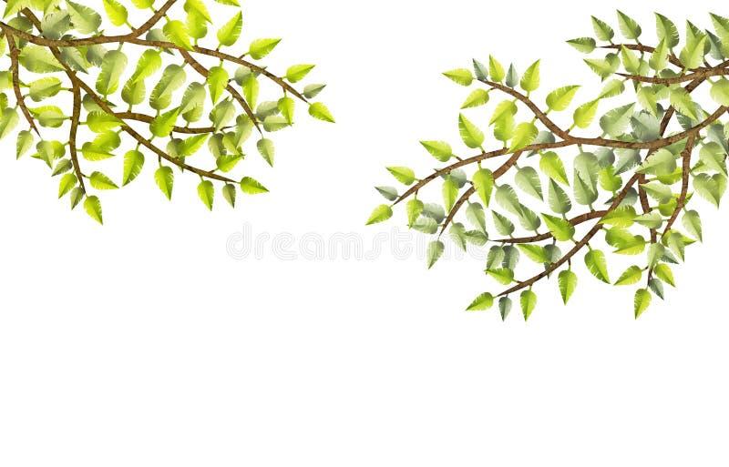 Sommerzeitbaumaste mit neuem Grün verlässt auf weißem Hintergrund und mit Kopienraum stock abbildung