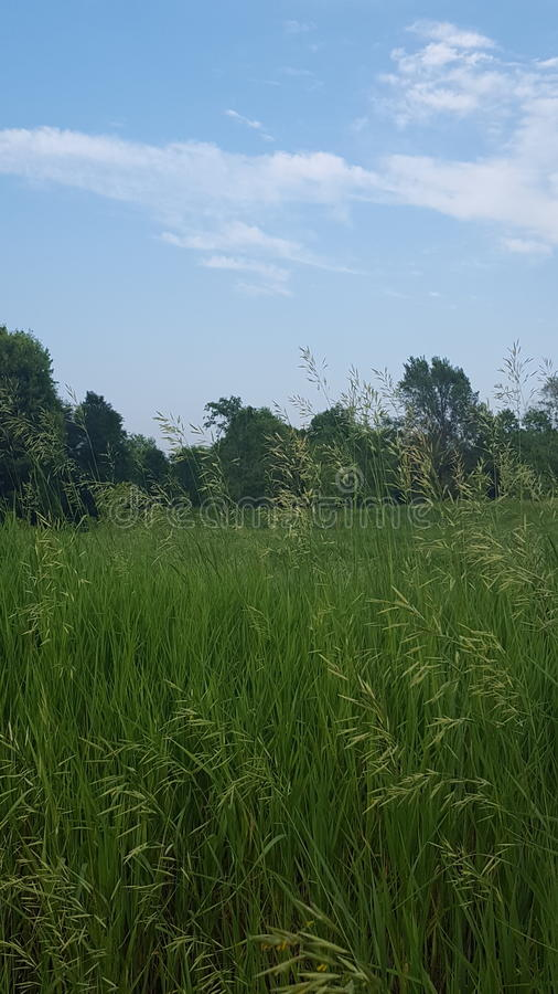 Sommerzeitfeld der Ruhe stockfoto