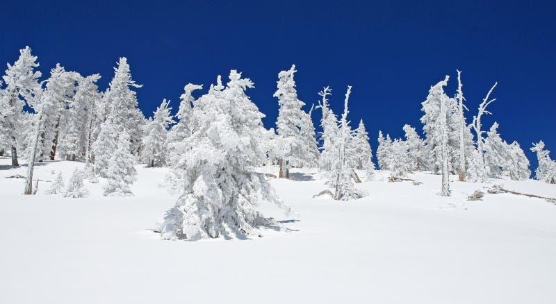 Sommet congelé de San Jacinto Peak, la Californie images stock