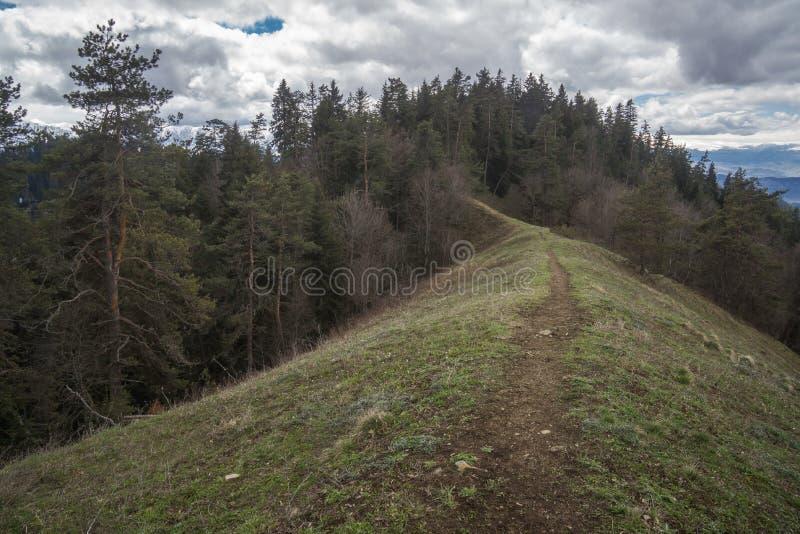 Sommet en parc national de borjomi images stock