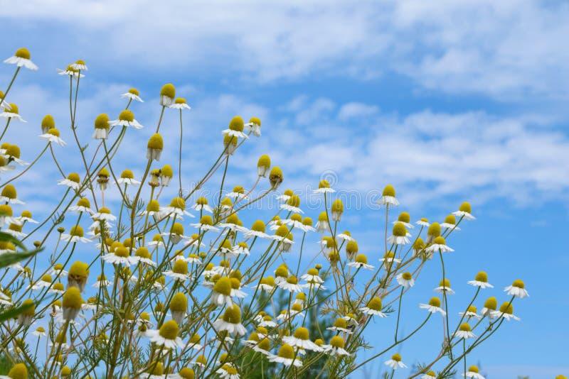 Sommige bloemen op weide stock afbeelding