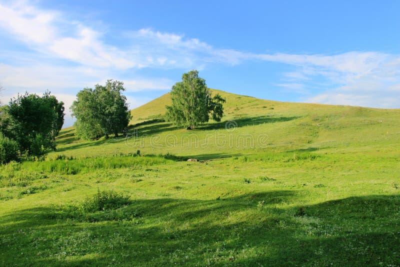 Sommige bomen op een groene heuvel bij één de zomerdag stock foto's