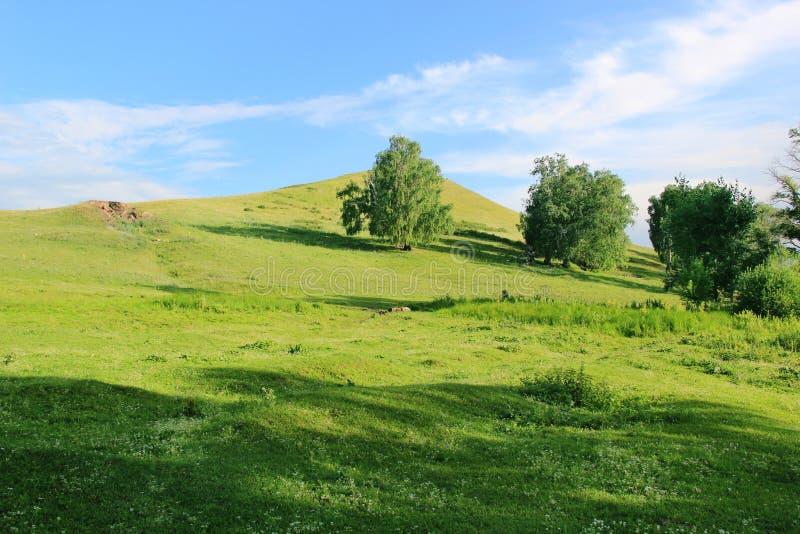 Sommige bomen op een groene heuvel bij één de zomerdag royalty-vrije stock fotografie