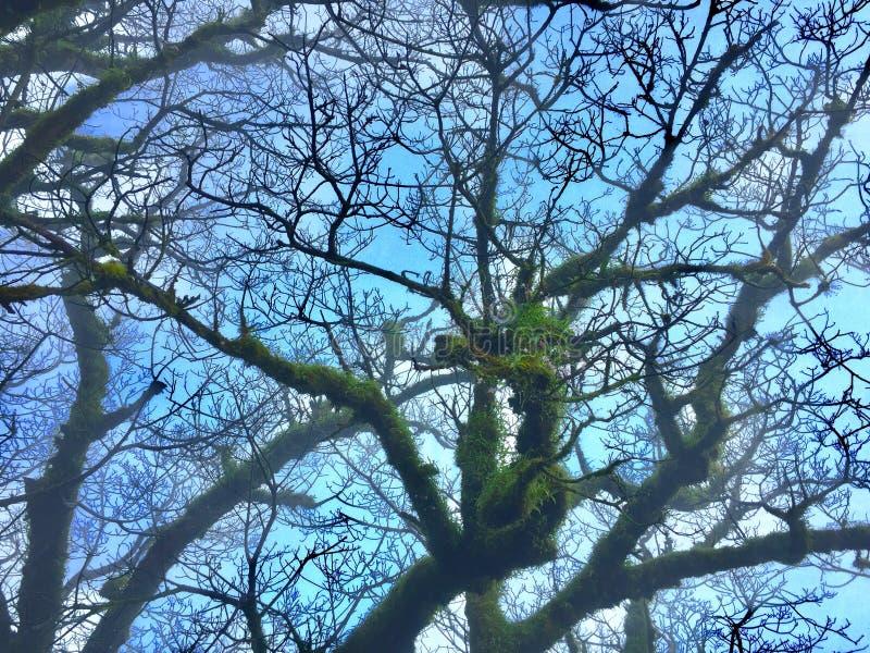 Sommige groene bladeren onder de leafless takken van een boom stock foto's