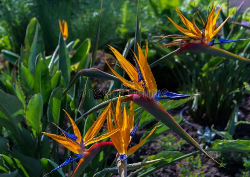 Sommige kleurrijke bloemen in een park stock afbeeldingen