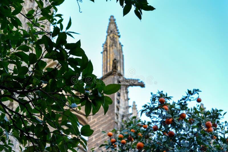 Sommige oranje bomen met een detail van Sevilla Cathedral op de achtergrond stock foto's