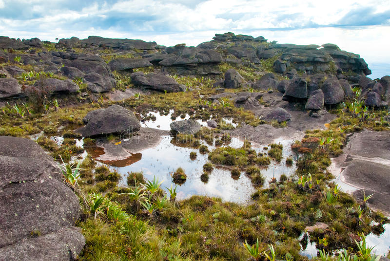 Sommità di Tepui del Roraima, Gran Sabana, Venezuela immagini stock libere da diritti