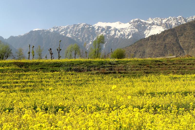 Sonamarg, Srinagar, India: Pi?kny krajobraz z ?nie?n? g?r? zdjęcia stock