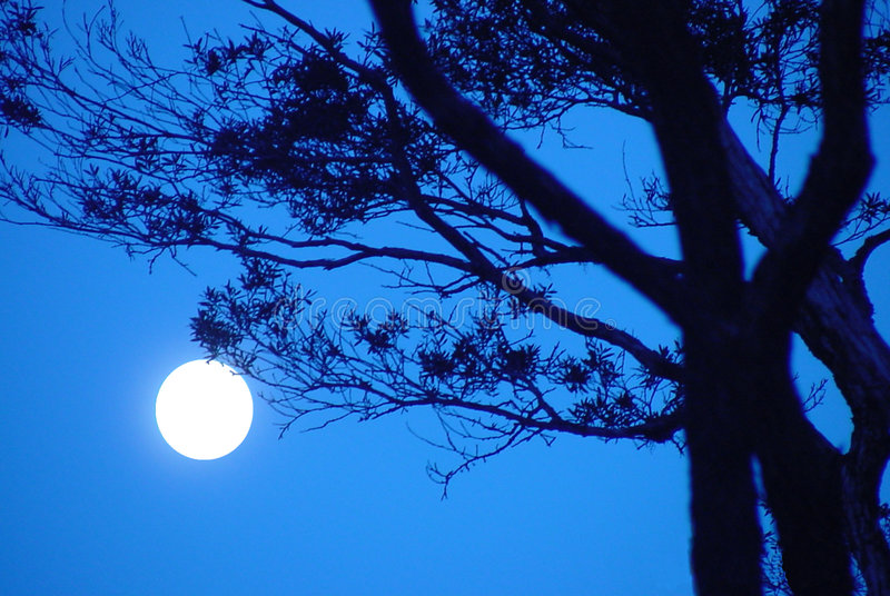 sonata σεληνόφωτου στοκ φωτογραφίες