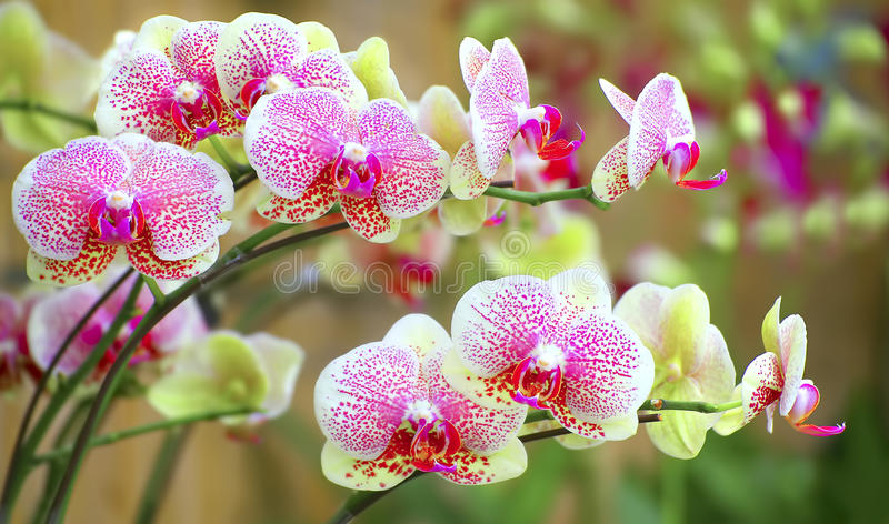 Sonata de orquídeas vibrantes imagen de archivo libre de regalías