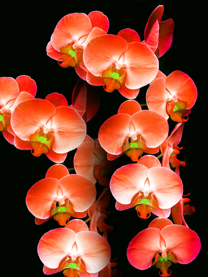 Sonata of Orchids stock photos