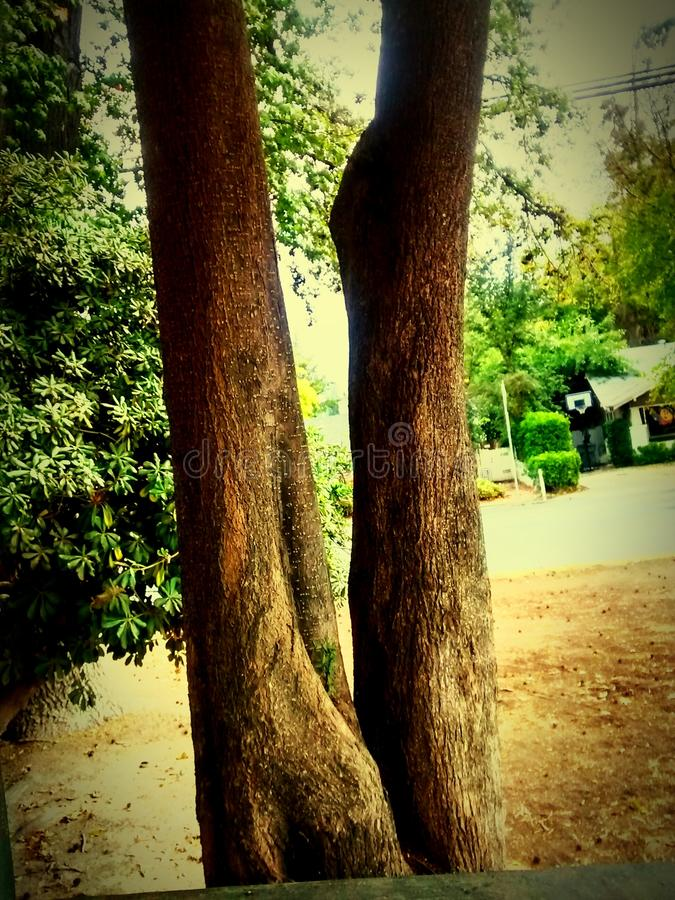 Sonderbarer Baum lizenzfreies stockfoto