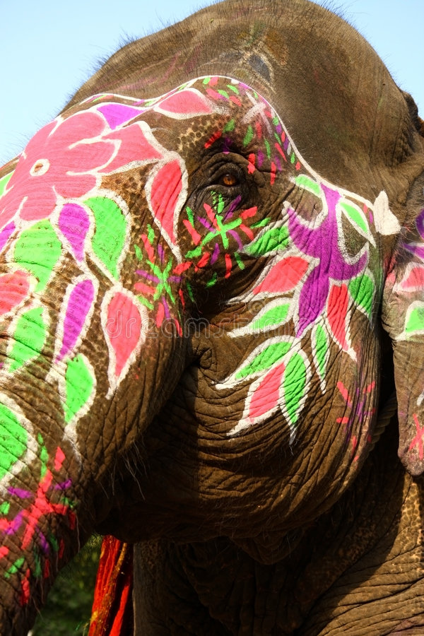 Sonderkommando des farbigen Elefantkopfes stockfotografie