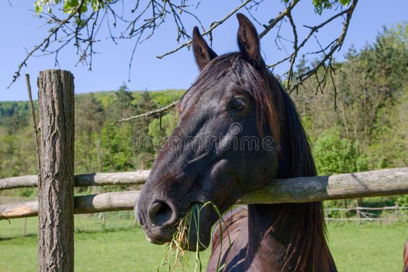 Sonderkommando des Pferdenkopfes lizenzfreie stockbilder