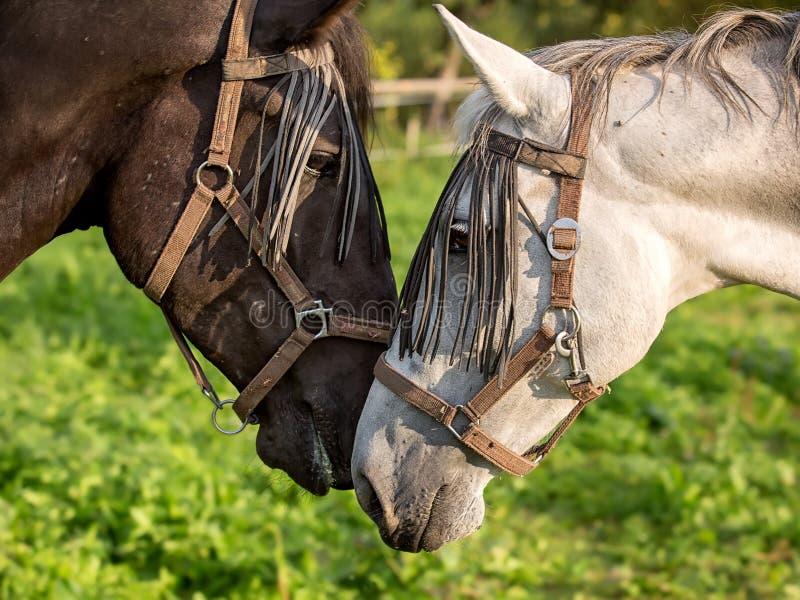 Download Sonderkommando Des Pferdenkopfes Stockfoto - Bild von gesicht, dunkel: 26353194