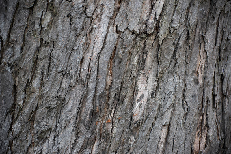 Sonderkommando im Baum lizenzfreies stockbild