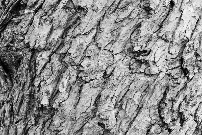 Sonderkommando im Baum stockfotografie
