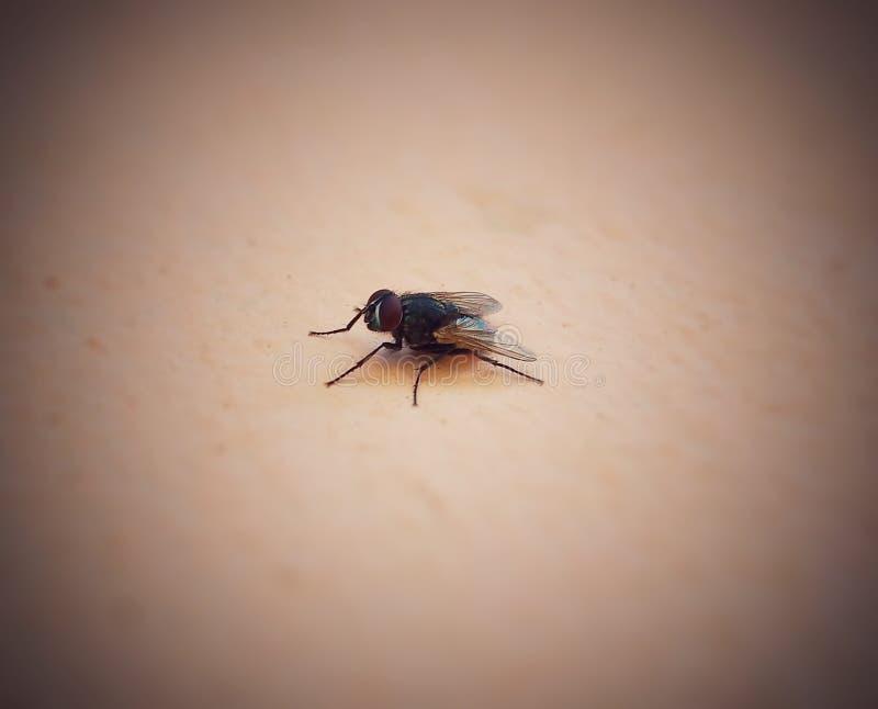 Sondern Sie Fliege aus lizenzfreies stockbild