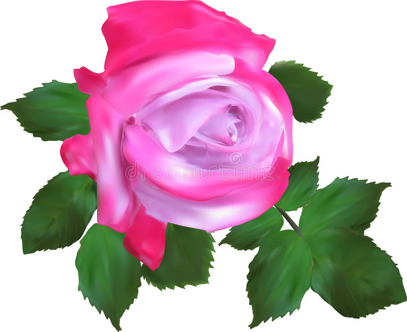 Sondern Sie lokalisierte helle Rosarosenblume aus stock abbildung