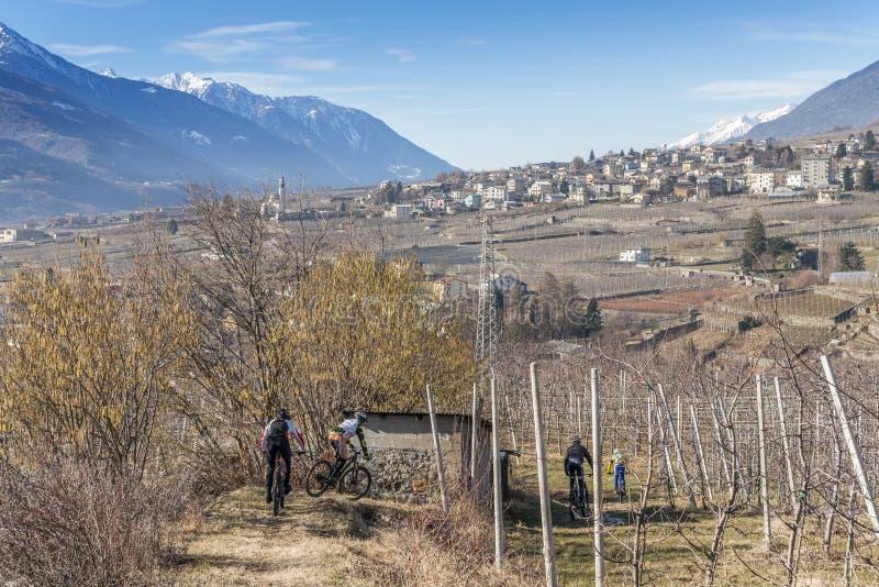 Sondrio Włochy, Jan, - 28, 2018: Halni rowerzyści wśród winniców w Sondrio Valtellina, Włochy podczas zimy, - fotografia stock