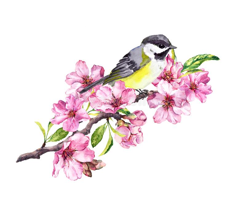 Song bird on cherry blossom branch with spring sakura flowers in springtime. Watercolor stock illustration