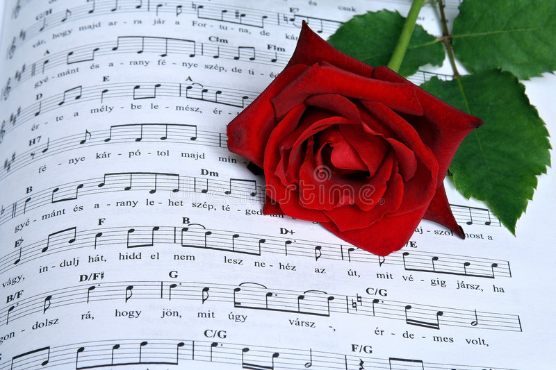 The song of rose stock photo