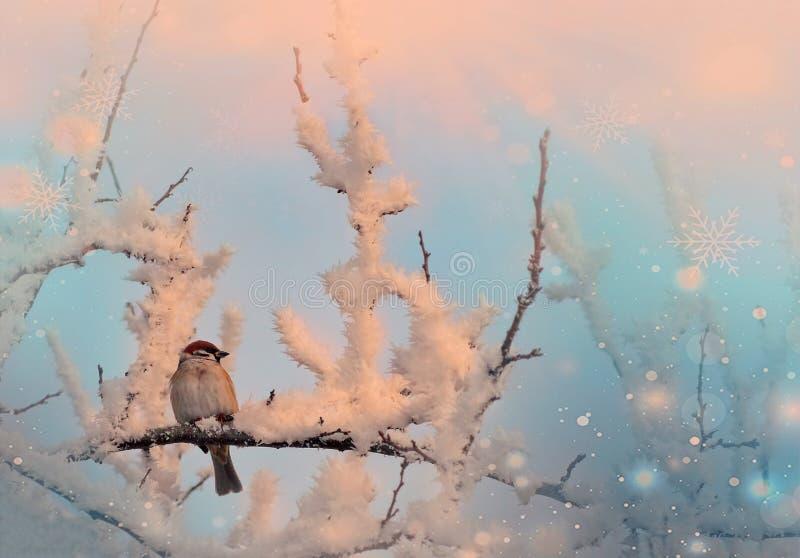 Songbird Tree Sparrow, Passer montanus, sittande på en gren med snö under vintern arkivfoton