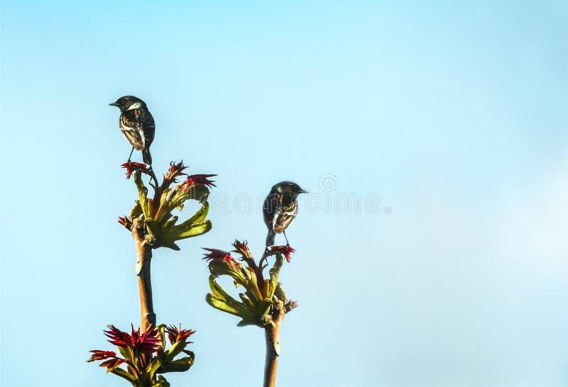 songbirds royaltyfri bild